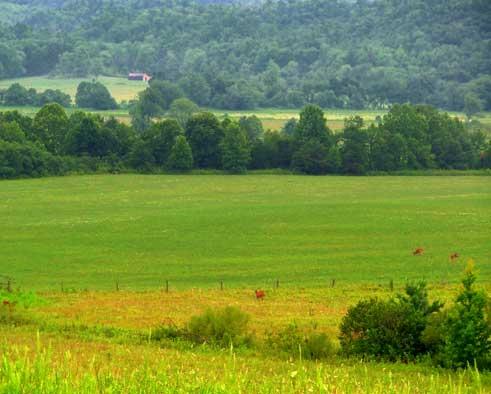 Smokey Mtn Pasture